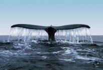 رشد شدید بیت کوین در سال ۲۰۱۷ کار یک نهنگ بوده است