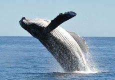 نهنگهای بیت کوین در حال اتحاد
